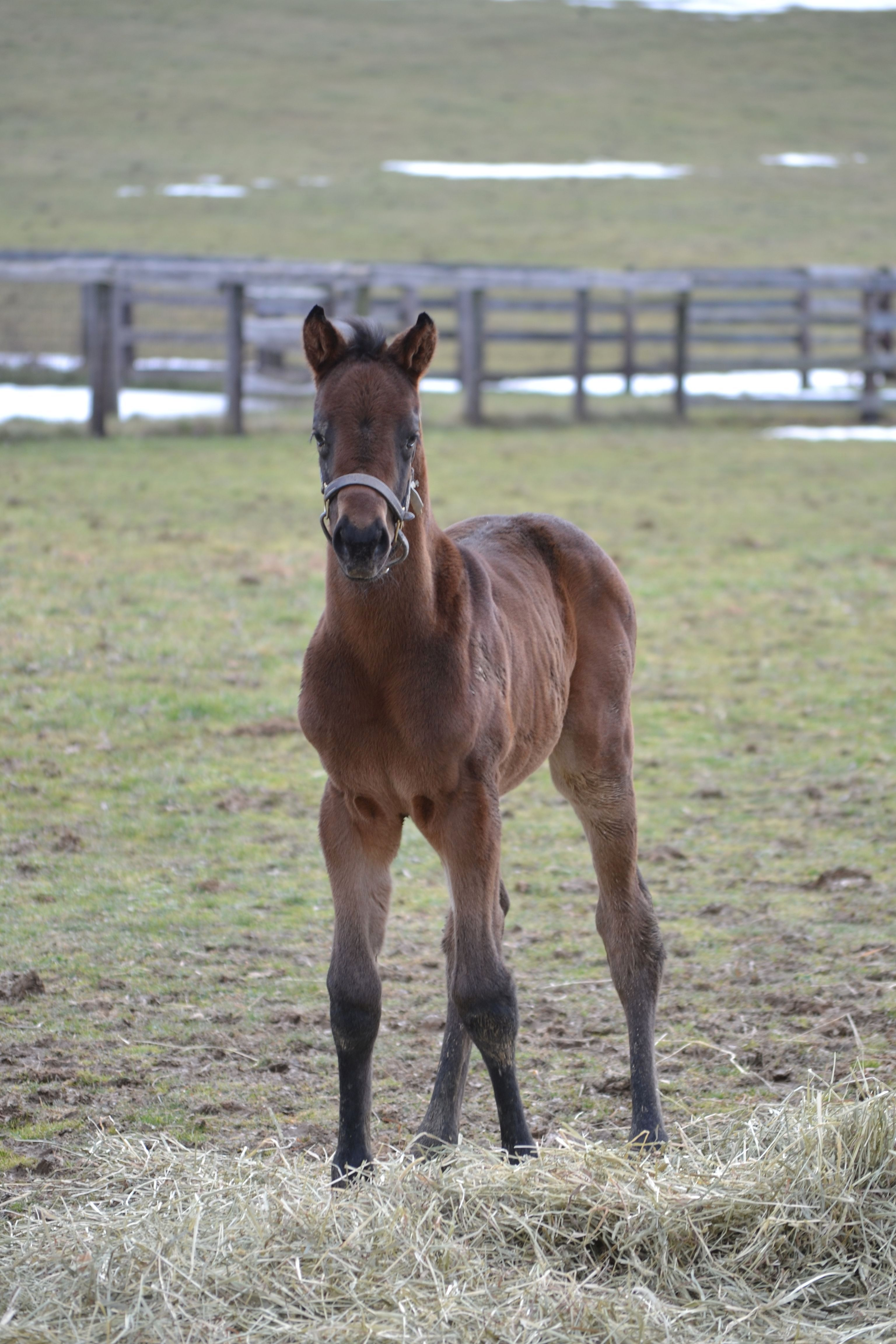 foaling report A student at the university of new brunswick has developed a system to predict  when a horse is about to foal it's a window that can last weeks,.